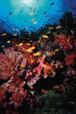 diving-02-1