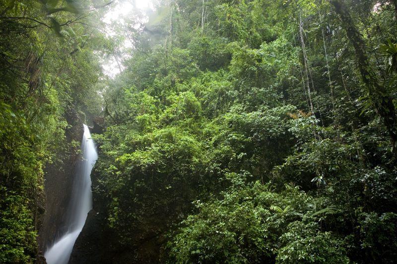 Fiji Savusavu Falls