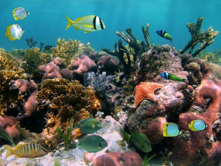 Swim with the fish of Fiji.
