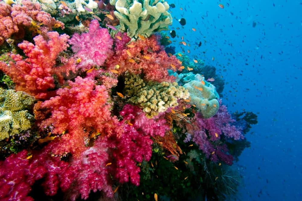 What fish will you see on your diving excursion at JMC?