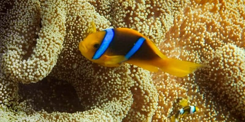 What animals will you spot while on holiday in Fiji?
