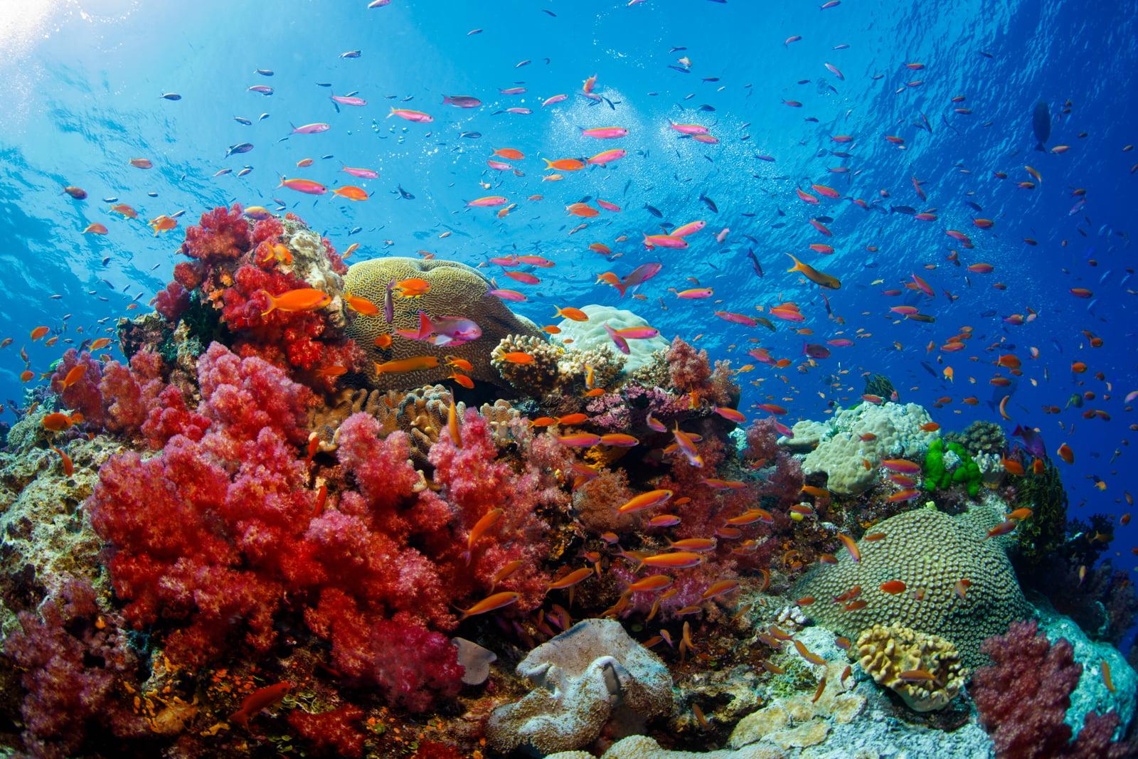 Fiji Savusavu JMC Resort Snorkel Reef