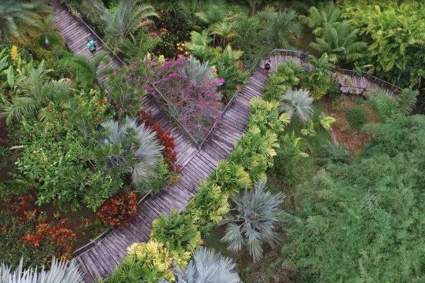 Fiji Savusavu Flora Tropica Botanical Gardens Overhead