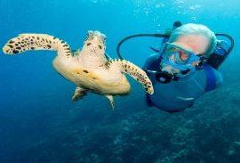 cousteau-dive-centre-overview270x183